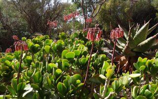 Free State National Botanical Gardens flowers